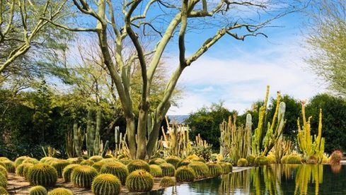 California landscape with cacti growing beside a reflecting pool.