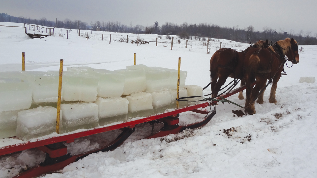 Ice harvests still take place in St. Lawrence County, N.Y. Cold-weather states are attractive to more conservative Old Order Amish, because many settlements do not permit gas- or kerosene-powered freezers. — Karen M. Johnson-Weiner, SUNY Potsdam