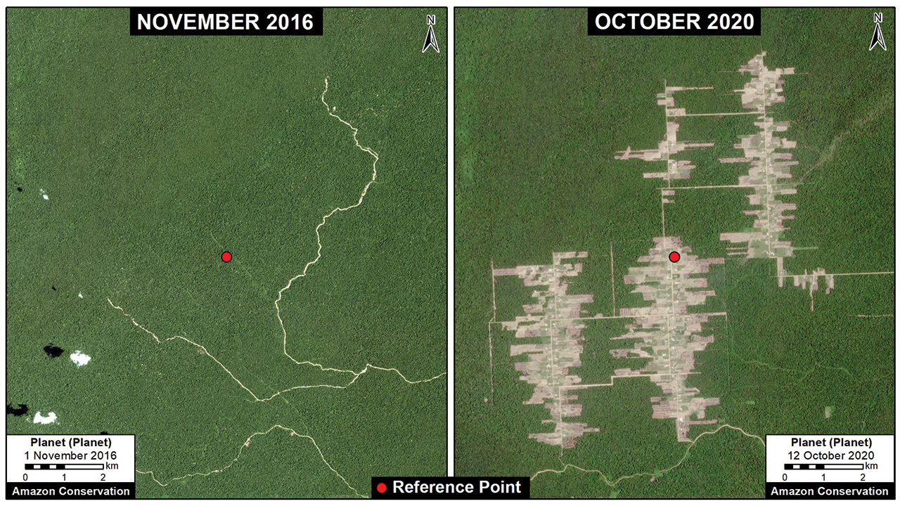 Deforestation totaling 5,370 acres has taken place between November 2016 and October 2020 at the Mennonite colony of Tierra Blanca 1 in Peru. — Monitoring of the Andean Amazon Project