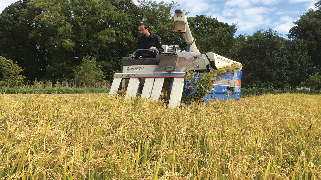 Kazu Epp, oldest son of Akiko Aratani and Raymond Epp, harvests rice at Menno Village near Sapporo, Japan. — Raymond Epp/MMN
