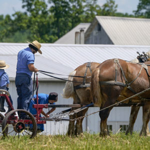 People in Amish country prepare a horse team to work on a farm in Pulaski, Pa., on June 23. The vaccination drive is lagging far behind in many Amish communities after a wave of virus outbreaks that swept through their churches and homes during the past year. — Keith Srakocic/AP